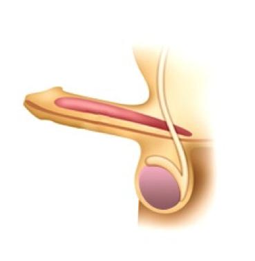 Viditelná část penisu je jen jeho polovina