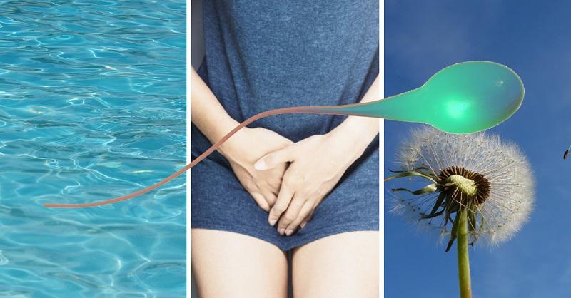 životnost spermií