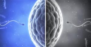 mýty a fakta o spermiích